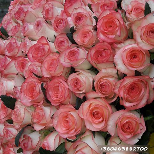 101 роза Джумилия фото